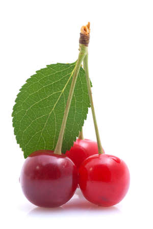 sour cherry: Morello cherries