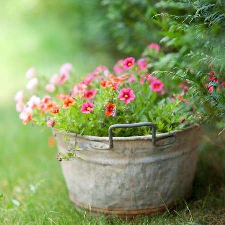 コテージ ガーデン 写真素材
