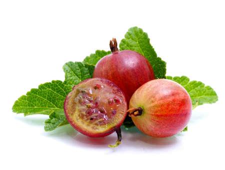 grosella: Gooseberries