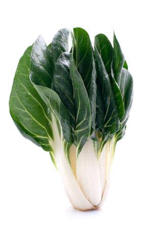 chard: Chard plant