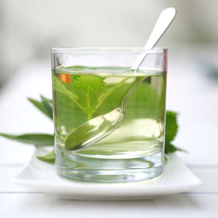 nettle: Herbal tea