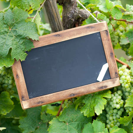 wineyard: Blackboard, grape-vine Stock Photo