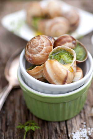 Grapevine snails Stock Photo