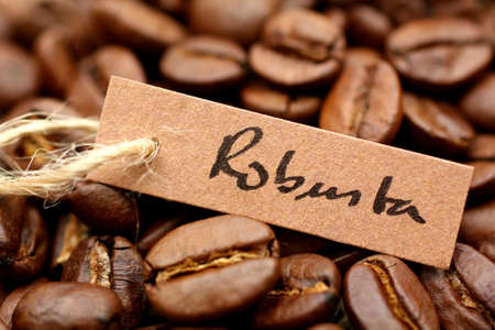 El caf� robusta Foto de archivo - 13392665