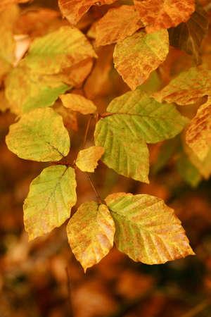 colores: Foliage