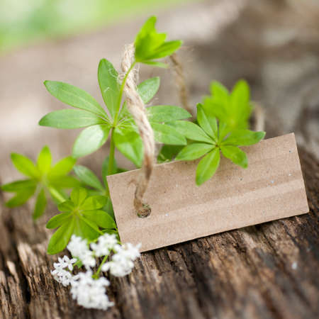 Sweet woodruff, label Stock Photo - 13573091