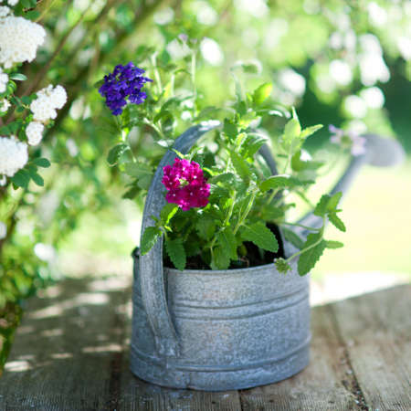 watering can: Country garden