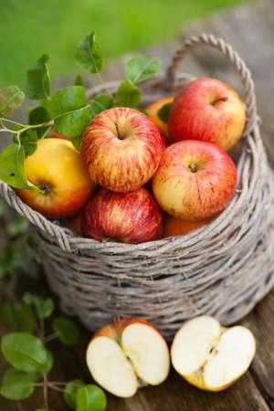 harvest basket: Fresh apples in a basket