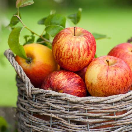 corbeille de fruits: Pommes fra�ches dans un panier Banque d'images