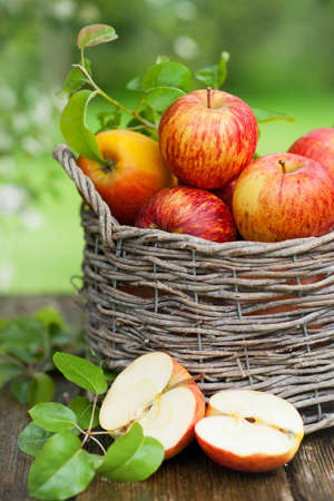 canastas con frutas: Manzanas frescas en una cesta Foto de archivo