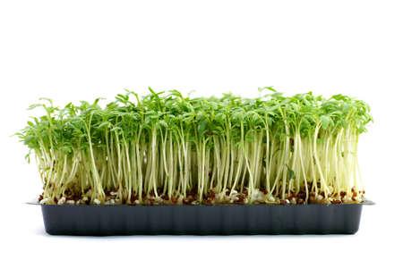 cress: Fresh cress Stock Photo