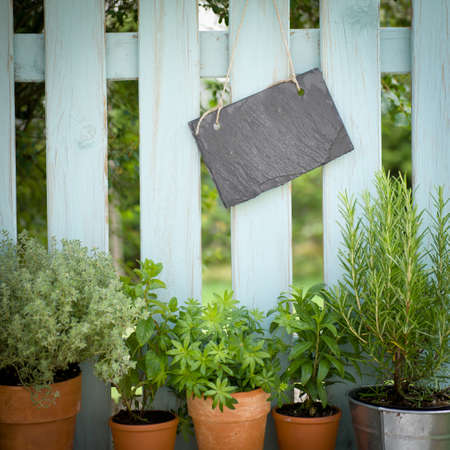 Fresh herbs, slate Stock Photo - 13983196