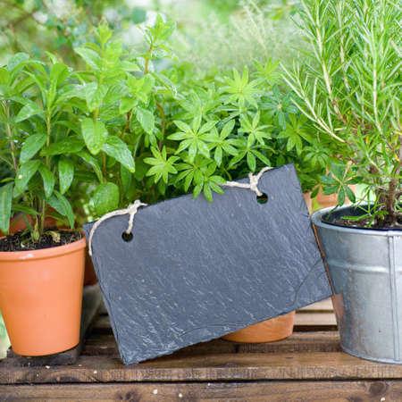 Slate, frehs herbs Stock Photo - 13983904