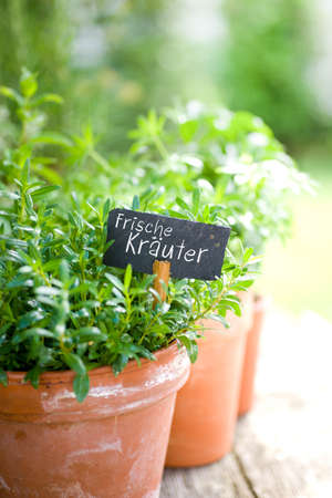 Frische Kr�uter Stock Photo - 13983900