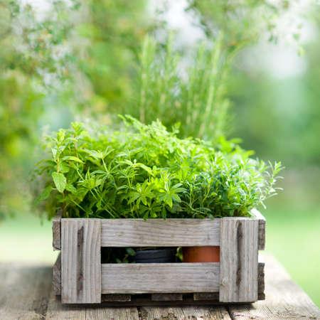 woodruff: Herbs in a wooden box