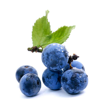 Fresh sloes on white ground Stock Photo