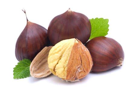 Chestnut on white ground