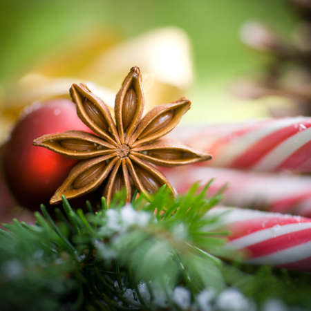 Star anis, christmas time Stock Photo - 14928536