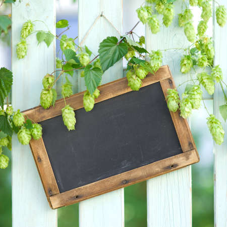 brewage: Fresh hops with slate Stock Photo