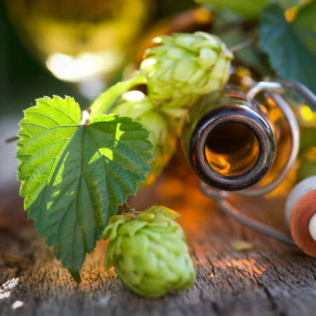 brewage: Fresh hops