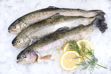 raw fish: Fresh trout on ice Stock Photo