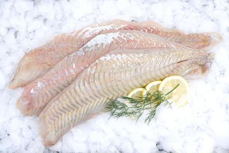 coalfish: Fresh coalfish on ice