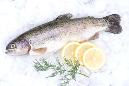 Fresh trout on ice photo
