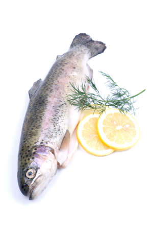 brook trout: Fresh trout on white ground