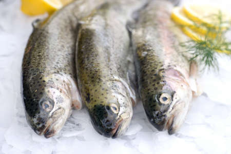 brook trout: Fresh trout on ice Stock Photo