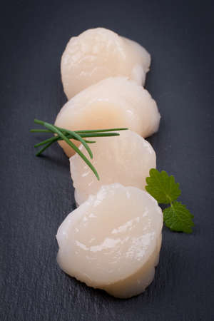Fresh scallop on a slate