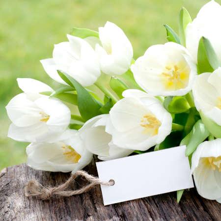 flores de cumpleaños: Etiqueta, tulipanes Foto de archivo