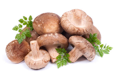 Shiitake mushrooms Stock Photo