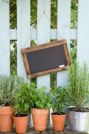 Fresh herbs Stock Photo - 24457328