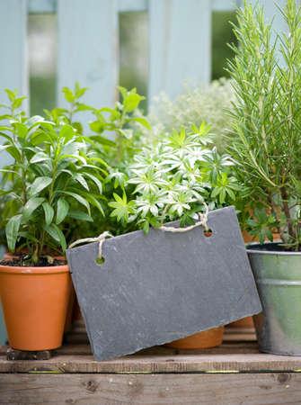 Fresh herbs Stock Photo - 24457329
