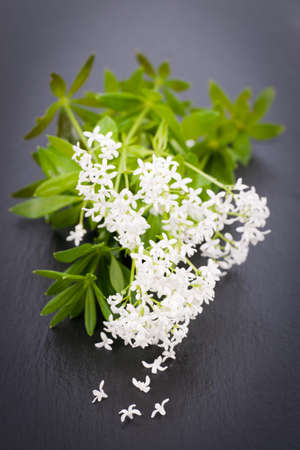 sweet woodruff: Sweet woodruff Stock Photo