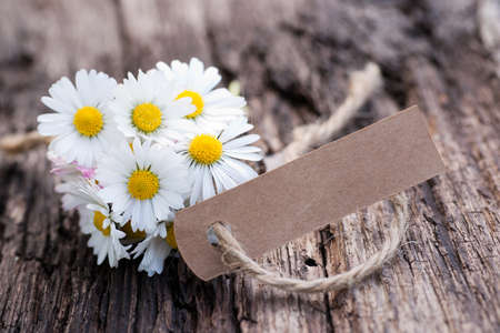 Daisy flowers, label Zdjęcie Seryjne