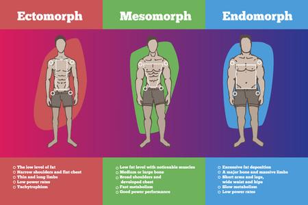 men body types diagram with three somatotypes
