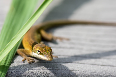 Lizard next to blades of grass Stock Photo