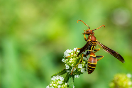 Wasp cleaning on flower
