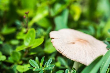 White mushroom in grass