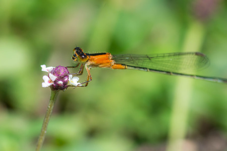Damselfly on a flower Stock Photo