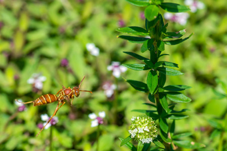 Wasp in flowers Stock Photo