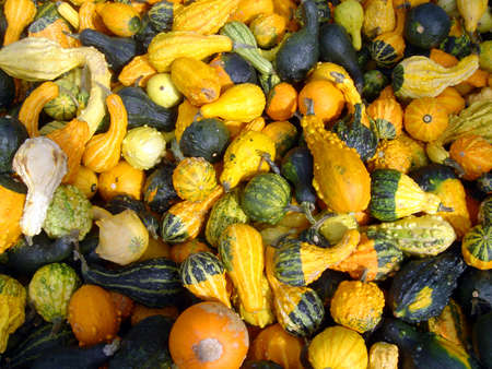 canada agriculture: Gourds at Thanksgiving fair Stock Photo