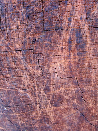 Texture of a cross section of giant sequoia tree trunk photo