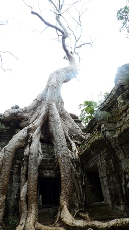 Ta Prohm Temple, Angkor, near Siem Reap, Cambodia photo