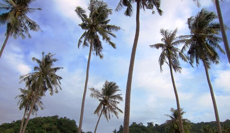 Coconut trees against clouds and blue sky Stock Photo