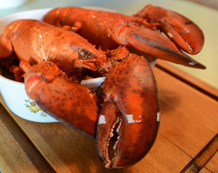 Cooked Nova Scotia Hard Shell Lobsters photo