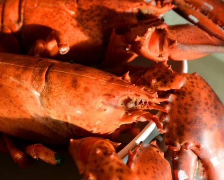 Cooked Nova Scotia Hard Shell Lobsters photo