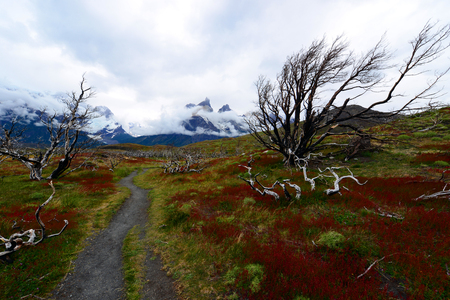 puerto natales: Torres del Paine National Park, near Puerto Natales, Patagonia, Chile Stock Photo