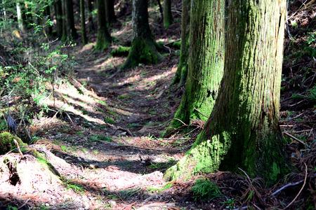 Kumano Kodo ancient pilgrim route at Kii Mountains, near Tanabe, Kansai, Japan